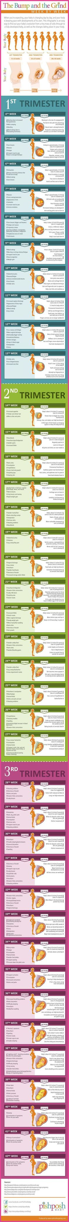[Pregnancy Symptoms] Pregnancy Timeline - A Male's Point of View ** For more information, visit image link. #PregnancyWeeklyGuides