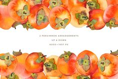 Watercolor Persimmon Collection is a pack of 6 persimmons (hand-painted from life and then scanned at 1200 dpi and cleaned out of background), as well as Persimmon Fruit, Fruit Arrangements, Photoshop Actions, Graphic Illustration, Flora, Hand Painted, Marshmallow, Watercolors, Kawaii