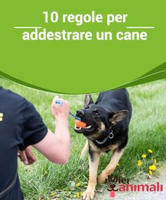 10 regole per addestrare un cane  Addestrare il proprio cane è una delle tante responsabilità derivanti dalla decisione di accoglierlo come membro della vostra famiglia.