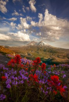 Mount St Helens - Penstemon and paintbrush bloom under summer clouds - Mount St. Helens, Washington
