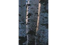 How Do I Soften Birch Bark? | eHow