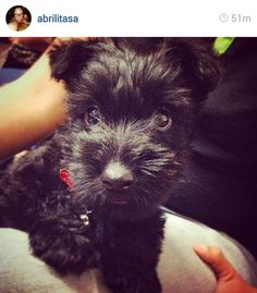 Scottie Mom: Scottish Terriers of Instagram: Week 4