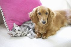 How To Introduce A New Pet To Your Furry Family