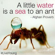 """A little water is a sea to an ant."" - Afghan Proverb 