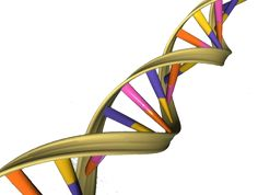 The world of epigenetics—where molecular 'switches' attached to DNA turn genes on and off—has just got bigger with the discovery by a team of scientists from the University of Cambridge of a new type of epigenetic modification.