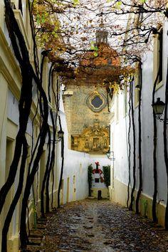 Jerez de la Frontera y las catedrales del vino QUE HERMOSO LUGAR, CON SOLO VERLO TE RELAJA.