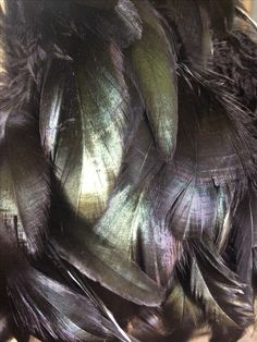 Natural black coque feathers
