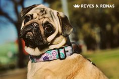 Primavera Verano / Pug / Jack Russell Terrier / Poodle / Caniche / Plaza / Juegos / Park / Happy dog / Fashion Dogs Dog Fashion, Jack Russell Terrier, Happy Dogs, Poodle, Pugs, Animals, King Queen, Dogs, Summer Time