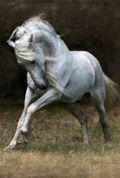 Equine. So pretty, wild and free.