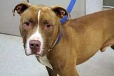 Millbank, cleared from CIRD, now on kill list at upstate SC shelter