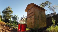 Honey on tap? Yes! Better for the bees, better for the beekeeper. No muss, no fuss, win, win. [have to check this out]