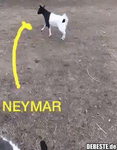 Neymar :D hahaha Funny Dog Memes, Funny Animal Memes, Funny Animal Videos, Funny Animal Pictures, Funny Cute, Really Funny, Funny Dogs, Funny Animals, Jokes
