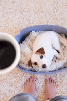 Morning essentials: puppy and coffee to get your day started. Cutest Jack russel terrier puppy sleeping. Dog photography.