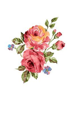 Rosa oleo
