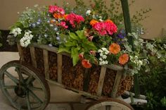 A repurposed goat cart used to hold a beautiful mini spring flower garden.