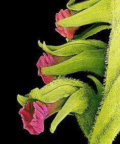 flower micrographs: Invisible Beauty Of Flowers