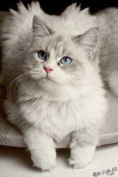 Brilliant... Beautiful Warrior Cat Names #visit
