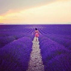 An engagement session in a field of lavender, now how incredible would that be? Photo from Gary Pepper, taken by Luke Shadbolt in Central France.