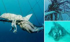 Popular Sydney beaches to trial SONAR shark detection
