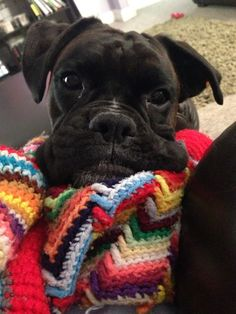 "See our website for even more relevant information on ""boxer puppies"". It is actually an outstanding spot for more information. Boxer Mom, Boxer And Baby, Cute Puppies, Cute Dogs, Black Boxer Puppies, Boxers, Baby Animals, Cute Animals, Boxer Breed"