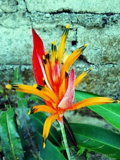 Bali's flower Lombok, Tropical Flowers, Beaches, Bali, Traveling, Around The Worlds, Colour, Plants, Beauty