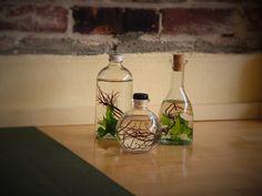 We got a new website!! Happy holidays!  www.culturedalgae.com Get zen with Cultured Algae