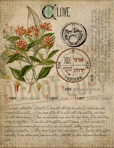 Magic plant knowledge has a long history and has a place in the modern witches Book of Shadows. Book of Shadows page. Witchcraft Books, Green Witchcraft, Wiccan Spells, Witchcraft Herbs, Magic Herbs, Herbal Magic, Witch Herbs, Modern Witch, Book Of Shadows