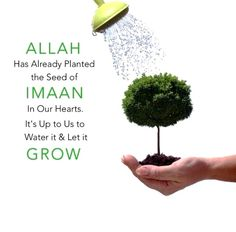 Allah has already planted the seed of imaan