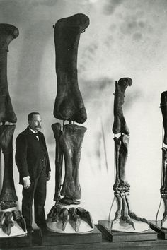 Postcard of preparator Adam Hermann with Diplodocus, Apatosaurus and Allosaurus hind limbs at the American Museum of Natural History.
