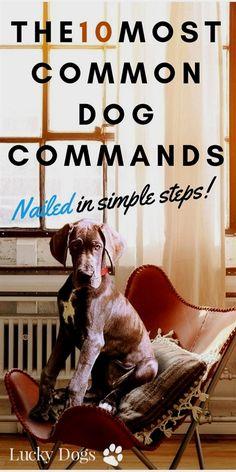 Vislor Is One Of The Best Platform For Dog Training Or Pet