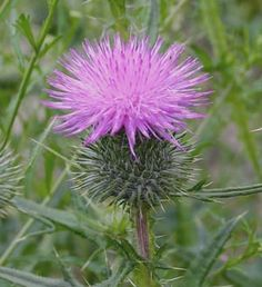 can anyone id these weeds? - Survivalist Forum
