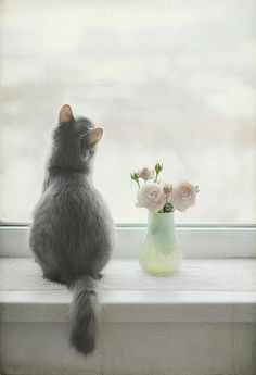 Pretty kitty sits and gazes out the window.