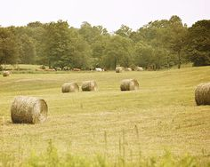 Making hay bales for winter.