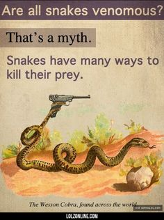 Dangerous Snakes#funny #lol #lolzonline