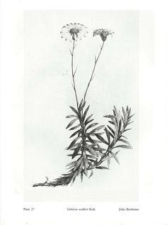 botanical drawing tattoos - Google Search