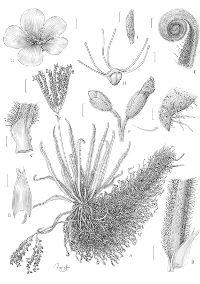 Royal Botanic Garden - The Margaret Flockton Award 2017