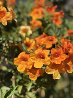 #60daysblessed Take a picture of a #flower and change your life. Don't believe me? Check out the deets: http://andrealechnerbecker.com/day-2-flowers/ #orangeflowers #desertplant