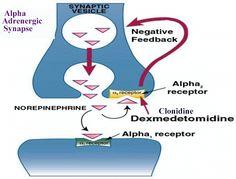 α2 receptors are located on the presynaptic terminal. eg Clonidine ligand is an α2 receptor agonist.  http://en.wikipedia.org/wiki/Alpha-2_adrenergic_receptor