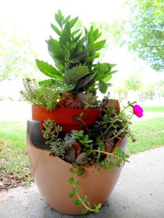 broken pot garden, gardening, repurposing upcycling, My 2nd broken pot garden I bought this broken pot at Lowe s I paid 10 00 for a 40 00 pot My hubby thought I was nuts I thought it was a good deal