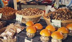 4 Medicinal Mushrooms that Fight Cancer