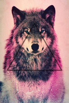 Wolf Wallpaper Hipster inspiration