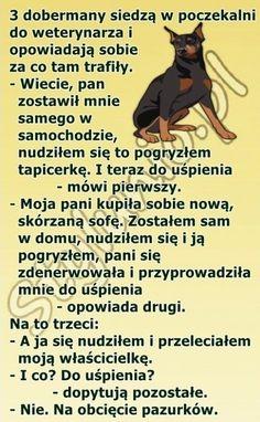30 najlepszych kawałów na poprawę humoru – Demotywatory.pl Smile Everyday, Wtf Funny, Doberman, Haha, Clever, Joker, Memes, Shakira, Quotes