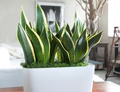 7 домашних растений, которые очищают воздух (а также очень неприхотливы)