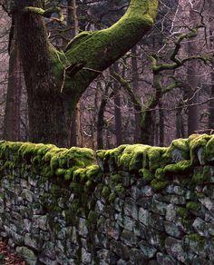 Padley Gorge by Tim Parkin, via Flickr