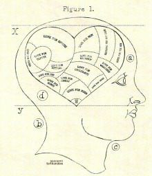 I stumbled across this link today: (http://www.syncrat.com/articles/science-of-love). It explains the science of love according to the Helen Fisher model of love which splits our notions of love into three brain functions: lust, romantic love (or attraction), and attachment. She believes love is a drive. This is a quality breakdown of what we're looking at in terms of hormones and neurotransmitters and their functions.