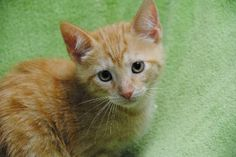 Kittens  Furkids rescues hundreds of homeless cats each year, including many kittens, that are in need of caring, lifelong homes. Most of our cats are listed online and some can be visited at our PetSmart and PETCO adoption centers.