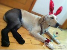 Funny Dogs Wearing Pantyhose – 15 Pics