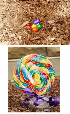 """Plant magic Jelly Bean seeds the night before Easter that will """"grow"""" into a lollipop flower over night. Fun idea for young kids."""