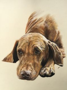 "Saffi the Hungarian Vizsla, pastel 16"" x 12""/40 x 30cm 2015 by Perpetual Portraits - Gillian Ussher Art"