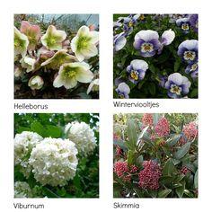 Winterharde Planten | Sfeervolle winterharde planten en bloemen